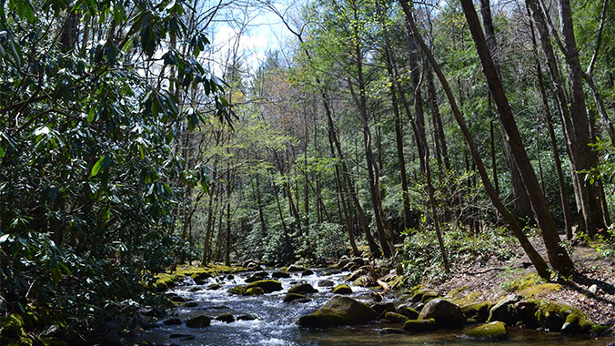 Great Outdoor Get-Together: Explore the Smokies
