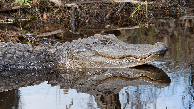 Kayaking At Amelia Island and Into the Okefenokee Swamp
