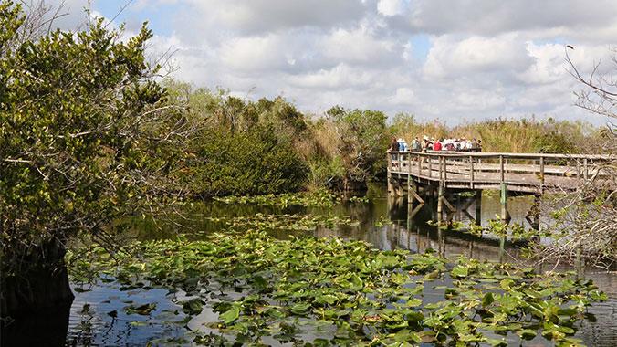 Everglades Florida with your Grandchild