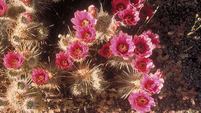 20397 - Signature City Tucson
