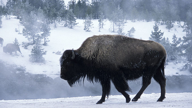 Heart of the Winter in Yellowstone