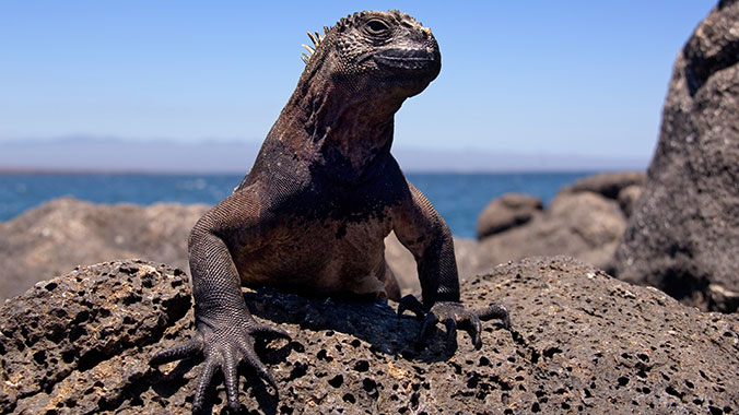 The Galápagos: Natural and Cultural History