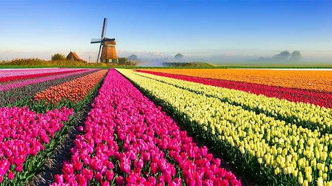 """Képtalálat a következőre: """"netherlands tulips"""""""