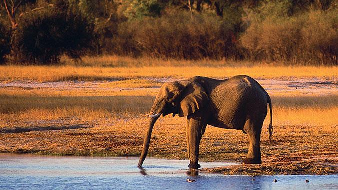 Wild Africa: Botswana, Zimbabwe and Zambia