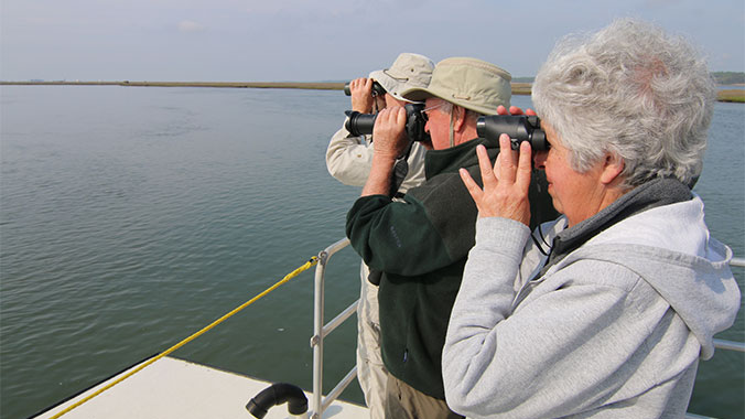 Birding Virginia's Eastern Shore: Assateague, Chincoteague and Wallops Island