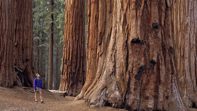 red wood for gorgeous - photo #27