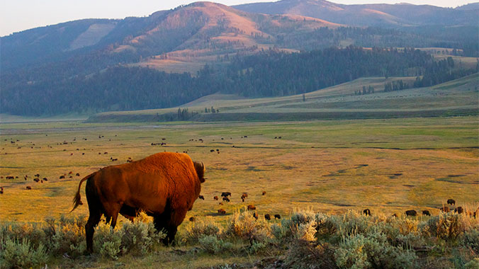 a review of my speech on the diversity in national parks The national park service, which oversees more than 131,000 square miles of parks, monuments, battlefields and other landmarks, thinks it's time for a change, too.
