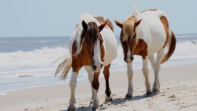 chincoteague island chatrooms Weather underground provides local & long range weather forecasts, weather reports, maps & tropical weather conditions for locations worldwide.